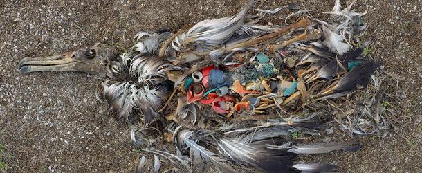 Последствия загрязнения океанов - Послание из Тихооокеанского мусорного пятна