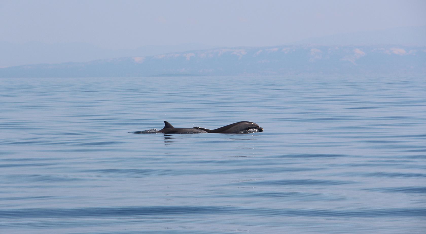 Лучшая работа в России 2014, второй репортаж из Хорватии. День дельфина